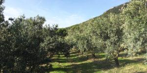 vallon-de-allamande-huile-olive-bio-cuers-83-Var