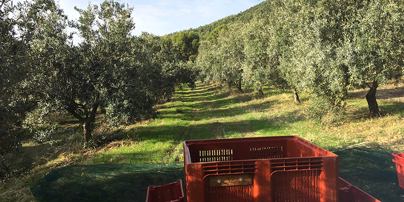 vallon-de-allamande-huile-olive-bio-cuers-83