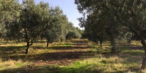 vallon-de-allamande-huile-olive-cuers-83
