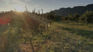 vente-professionnel-huile-olive-francaise-provence-bio-aoc-aop
