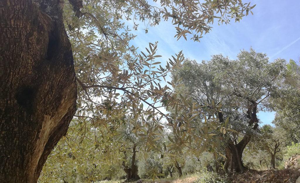 cadeau-entreprise-huile-olive