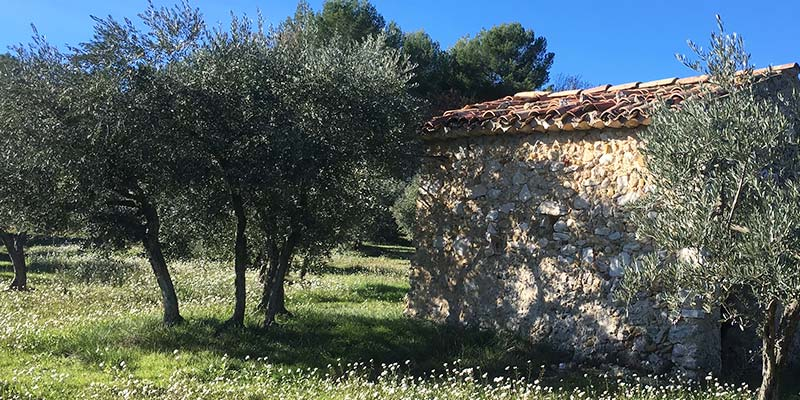 huile-olive-AOP-haute-provence-Bio-france-verdon-olive-enchantee-4