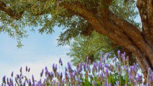 vente-Huile-olive-france-bio-aop-aoc-