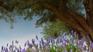 vente-Huile-olive-miel-france-bio-aop-aoc-