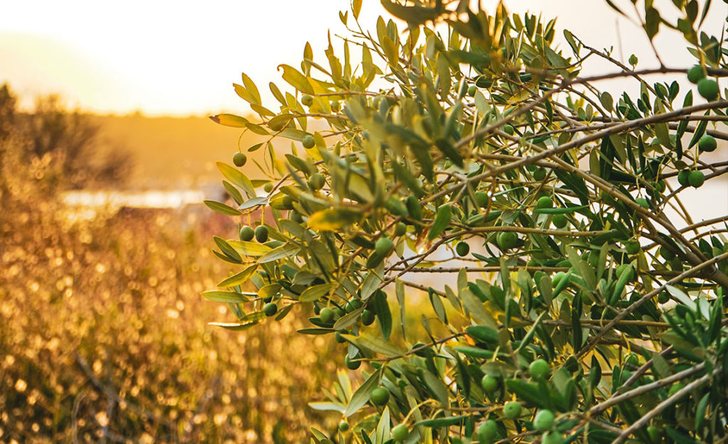 huile-olive-sante-osteoporose