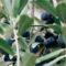 L'huile d'olive « Goût à l'ancienne » de Provence : une huile d'olive unique au monde !