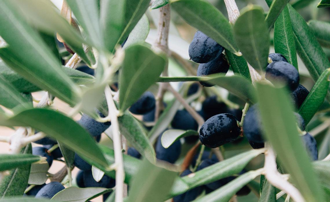 huile-olive-provence-france