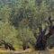 huile d'olive vierge extraréduit les risques de création de composés cancérigènes lors de la cuisson de la viande à hautes températures