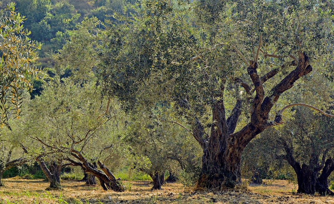 huile-olive-reduit-effet-cancerigene