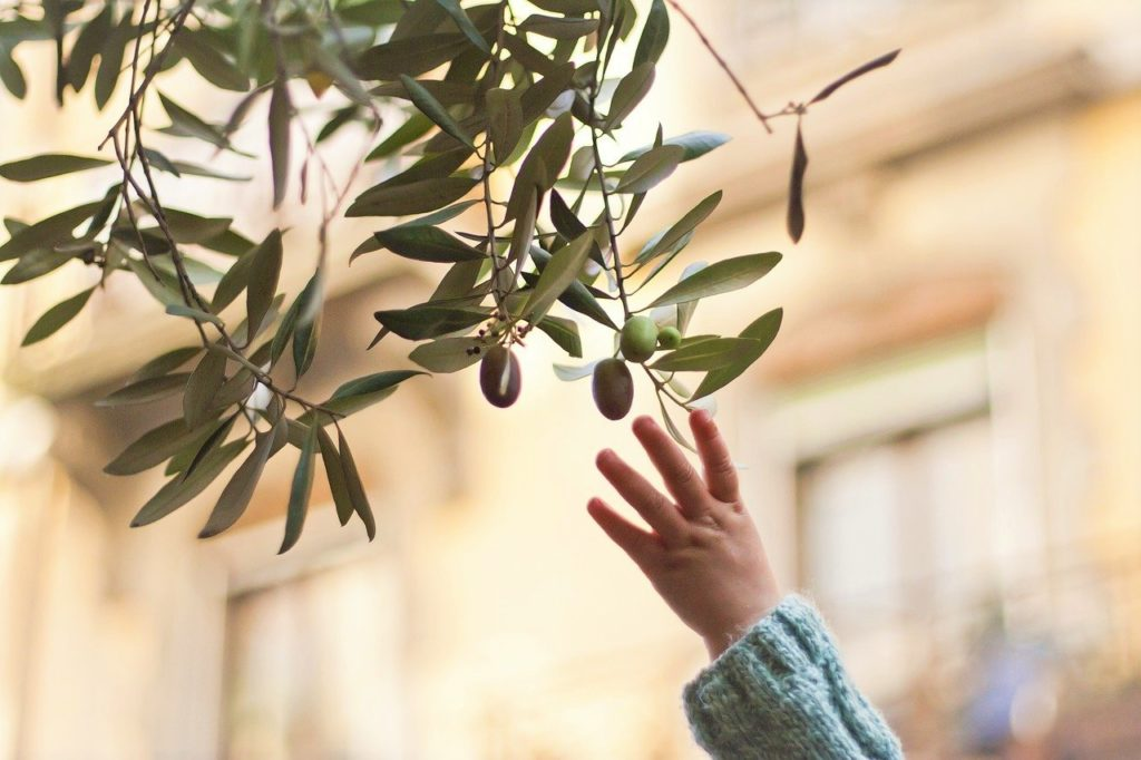 huile d'olive sur la santé bébé