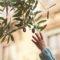 Les bienfaits de l'huile d'olive sur la santé des bébés