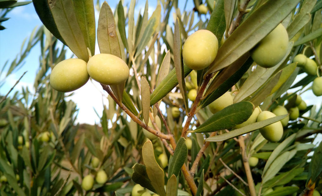 huile d'olive de france 2021 / 2022
