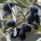 Zoom sur le Moulin de Haute Provence et les huiles d'olive produites par la famille Fayant