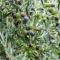 Zoom sur le Moulin Paradis et les huiles d'olive produites par Christophe Paradis