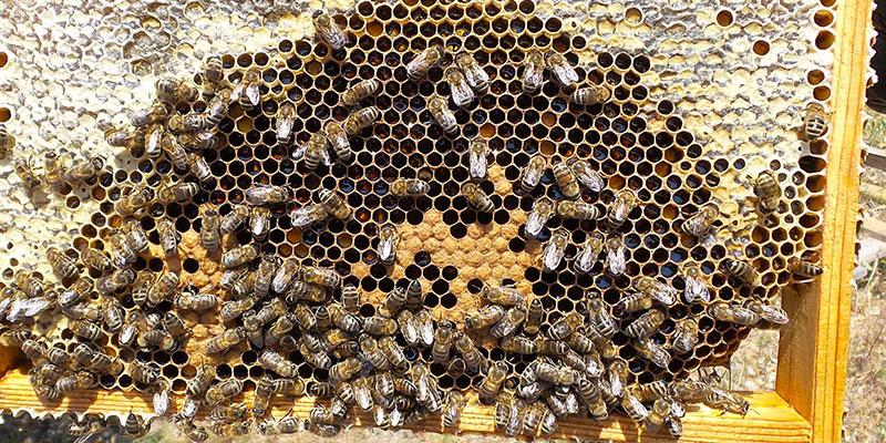 apiculteur-miel-lavande-provence