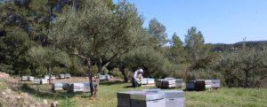 apiculteur-vente-miel-Provence-miel-lavande-83