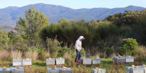 miel-provence-apiculteur