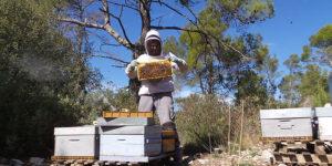 vente-miel-direct-apiculteur